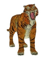 Tiger bullying
