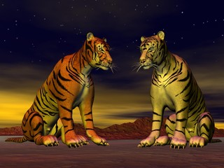 Two tigers in the desert