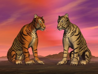 Two tigers and colorful sky