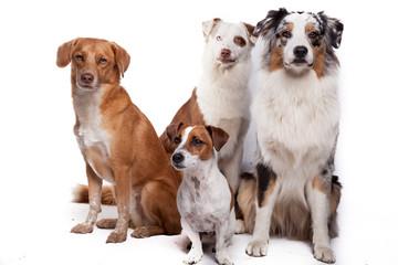 Hundegruppe - Vier Hunde