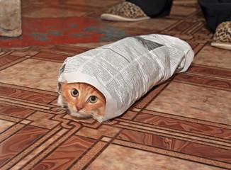 redhead kitty enfolded in newspaper