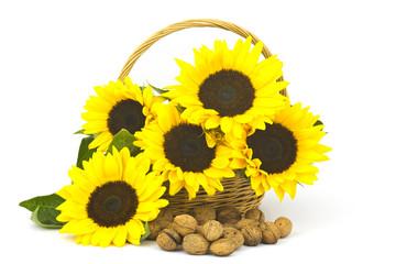 Beautiful sunflower bouquet in a basket
