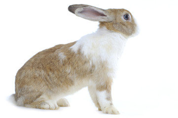 Rabbit in front of white