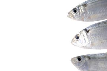 Head of fresh fish border