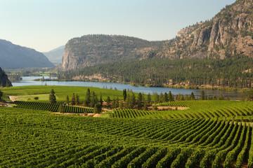 Okanagan Valley Vineyard Scenic, British Columbia Fototapete