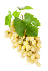 Fresh  white grapes with leaves. Isolated on white