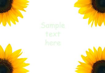 Blank flower frame