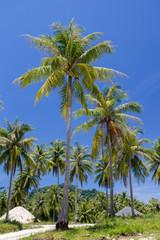 coconut tree on island