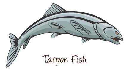Tarpon, Color Illustration
