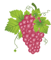 Red Grapes, illustration
