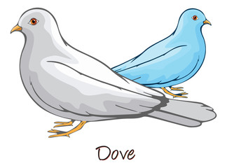 Dove, Color Illustration