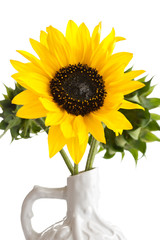 Flowers sunflowers in a vase