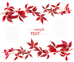 Red autumn leaf isolated on white background, with room for text