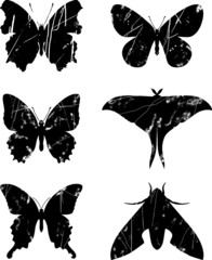 Butterfly grunge set 15