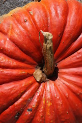 Kürbis, Halloween, Oktober, Herbst, Herbstlich
