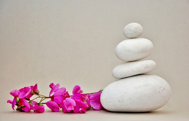 pietre bianche e orchidea selvatica