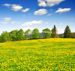 Photo sur Aluminium Jaune Spring landscape in the national park Sumava - Czech Republic