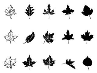 Black Maple leaves silhouette
