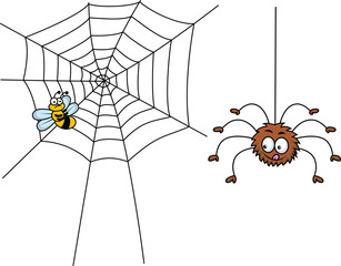 Spider prepare for lunch