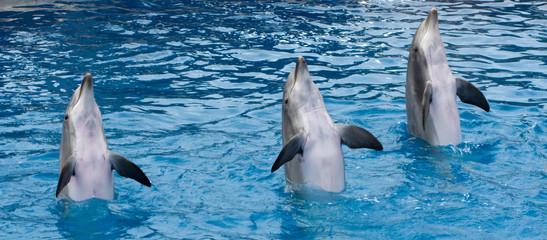 Fond de hotte en verre imprimé Dauphins Standing dolphins