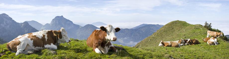 kühe in den bayrischen alpen mit breitenstein im hintergrund Wall mural