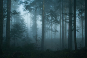 Fotobehang Bossen Magic morning spruce forest