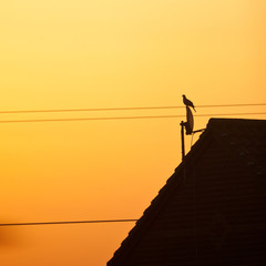 The Lone Watchman