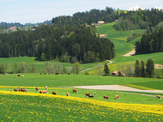 Wall Mural - Spring in Emmen valley (Emmental), Switzerland