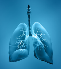 lungs x-ray