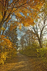 Autumnal path in the wood