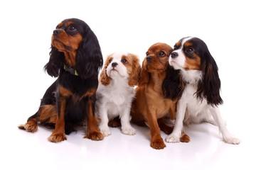vier junge Hunde links schauend