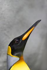 proud portrait of a male king penguin