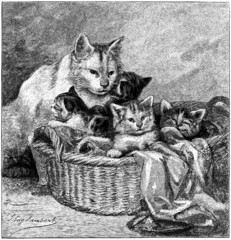 Maternity, Cat with kittens, vintage engraved illustration