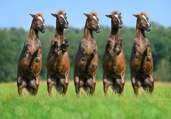 Fotoväggar - Five rear ponies