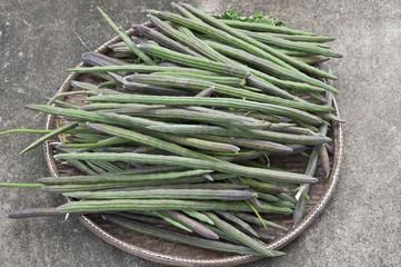 moringa thai herb