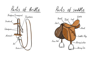 saddle-bridle