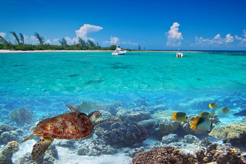 Papiers peints Caraibes Caribbean Sea scenery with green turtle in Mexico