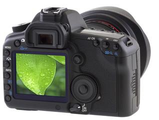 feuille de ficus sur appareil photo