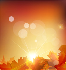 Vector abstract  autumn background with leafs and sun