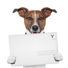 post envelope mail stamp dog