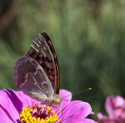 Beautiful Butterfly flying around flowers