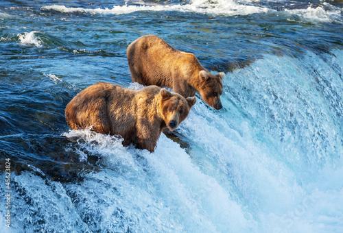 Alaskan Brown Bear Silhouetted Against Mount Katolinat, Alaska без смс