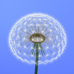 a dandelion on blue background
