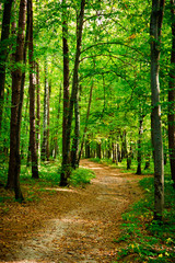 Path in beautiful beech forest near Rzeszow, Poland