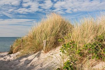 Wall Mural - Weg zum Strand durch Dünen bei Heiligenhafen an der Ostsee
