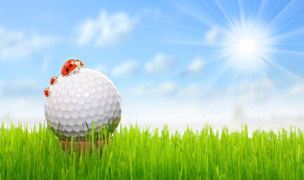 Golf ball on the green with funny ladybugs.