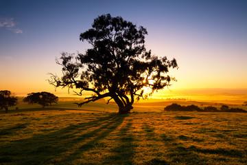 Meadow Dawn