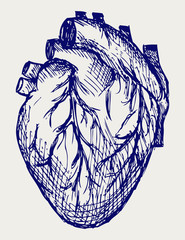 Human Heart. Doodle style