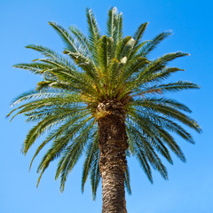 Green palm tree against blue sky background