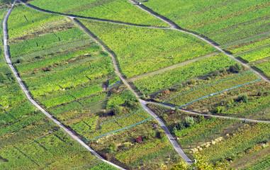 Weinberge - Luftaufnahme